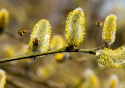 Allergien | Allergies